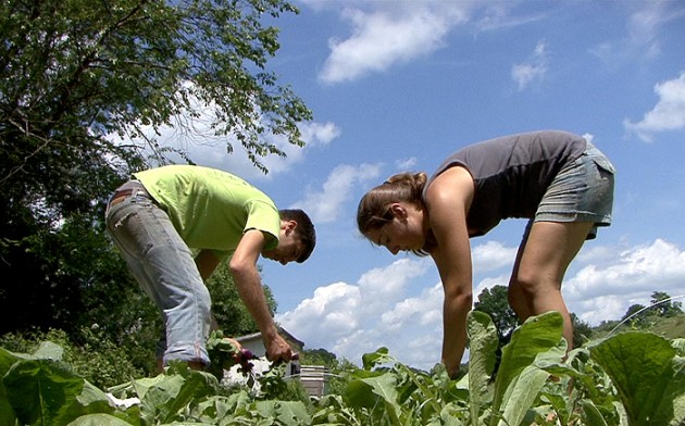 Students growing vegetables at Spring Valley Farm. (Bret Eckhardt/UConn File Photo)