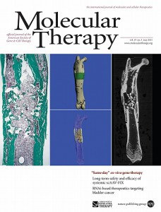Researchers from the New England Musculoskeletal Institute have come up with a way to speed up and enhance bone repair, and their work is featured on the cover of the May 2011 journal Molecular Therapy. (M. Quillen/Molecular Therapy)
