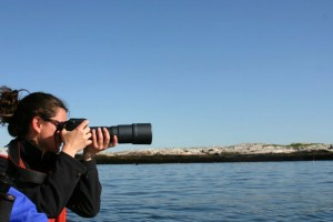 The focus is on seals off the Isle of Shoals, located off the coast of Maine and New Hampshire._lg