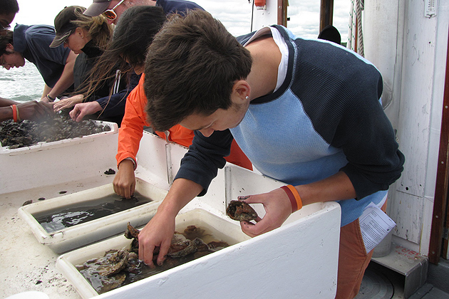 Biology students were able to get a close up look at various forms of aquatic life. (Sheila Foran/UConn Photo)