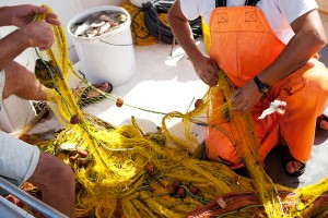 Repairing fishing nets. Catch limits have been hotly debated.