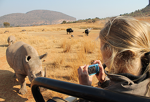 Amy Richardson '13 (CANR) photographs a rhino from a cruiser in South Africa.on Aug. 30, 2012. (Lee Hecker '13 (CLAS)/UConn Photo)