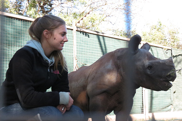 Alana Russell '13 (CANR) visits with a black rhino calf, the first resident of a newly established orphanage for baby rhinos in South Africa. Russell spent the summer of 2012 at the orphanage serving as one of the calf's caretakers. (Stefanie Dion Jones/UConn Photo)