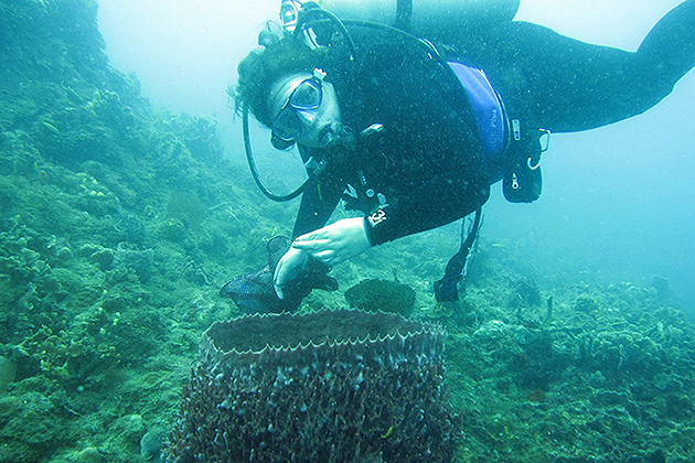 Marcy Balunas collecting a marine cyanobacterium from inside a large sponge i Portobelo National Park in Panama. (Photo courtesy of Marcy Balunas)