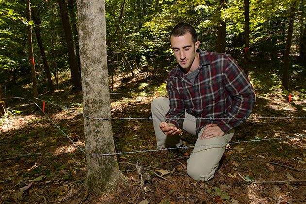 Evans examines barbed wire for bear hair. He and other students spent the summer gathering samples around the state for DNA analysis. (Peter Morenus/UConn Photo)