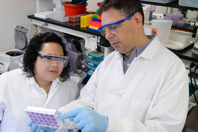 Paulo Verardi, assistant professor of pathobiology, and Allison Titong, a Ph. D. student and a co-author of the article published by PNAS, examine plates of vaccinia virus. (Peter Morenus/UConn Photo)