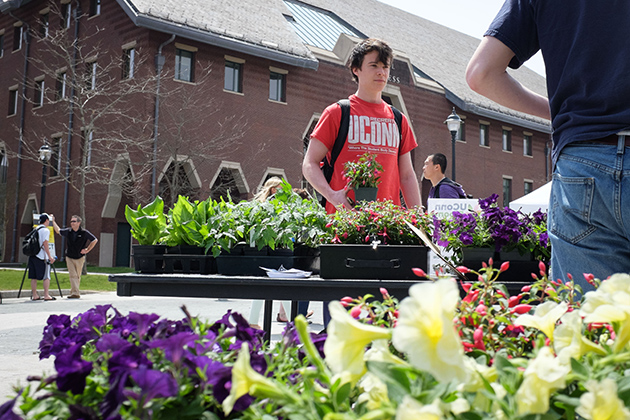 Rowan Lucy '16 (BUS) buys a few plants from the UConn Blooms table during the UConn Earth Day Spring Fling held along Fairfield Way on April 22, 2014. (Peter Morenus/UConn Photo)