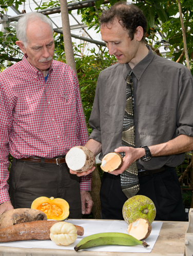 Gregory Anderson, Board of Trustees Distinguished Professor Emeritus of Ecology and Evolutionary Biology, left, and David Taylor '94 (CLAS), assistant professor of biology at the University of Portland, have collaborated on studies of the consumption of certain foods by immigrant groups since Taylor was an undergraduate. (Peter Morenus/UConn Photo)