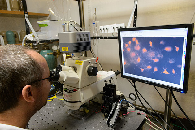 Daniel Mulkey, associate professor of physiology and neurobiology, looks at tissue under a microscope at his lab. (Peter Morenus/UConn Photo)