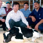 A UConn research team led by Xianshong 'Jerry' Yang, center, developed the world's first cloned cow, Amy, in 1999. (Peter Morenus/UConn File Photo)