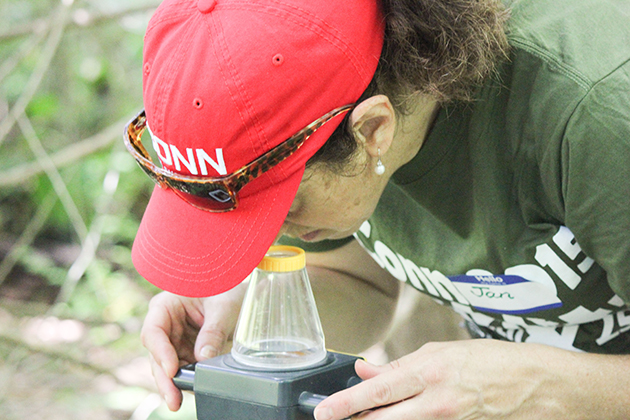 Jan Tomanelli, a teacher the Charles H. Barrows STEM academy in Windham looks at insects at the HEEP wetlands near North Campus during BioBlitz 2015 on July 25, 2015. (Sheila Foran/UConn Photo)