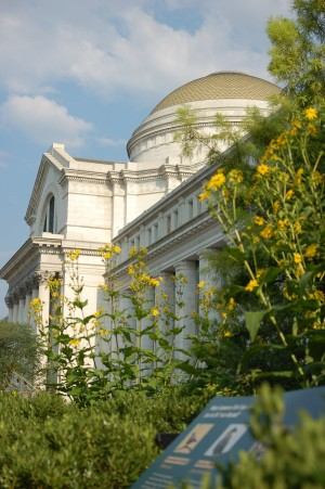 The National Museum of Natural History in Washington, D.C. (James Gagliardi/Smithsonian Gardens Photo)