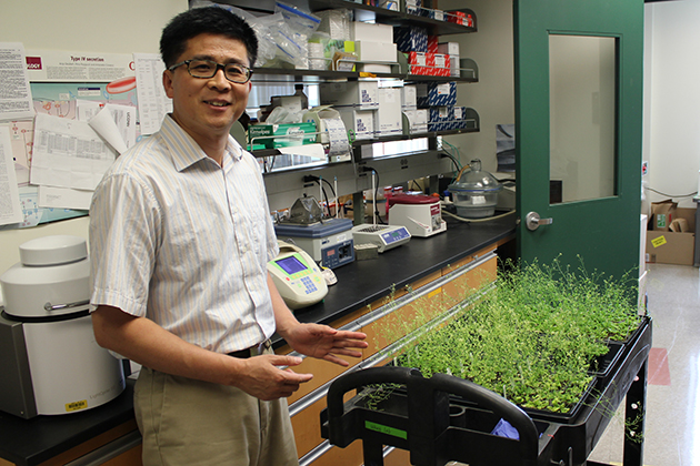 Huanzhong Wang, assistant professor in the Department of Plant Science and Landscape Architecture. (Kevin Noonan/UConn Photo)