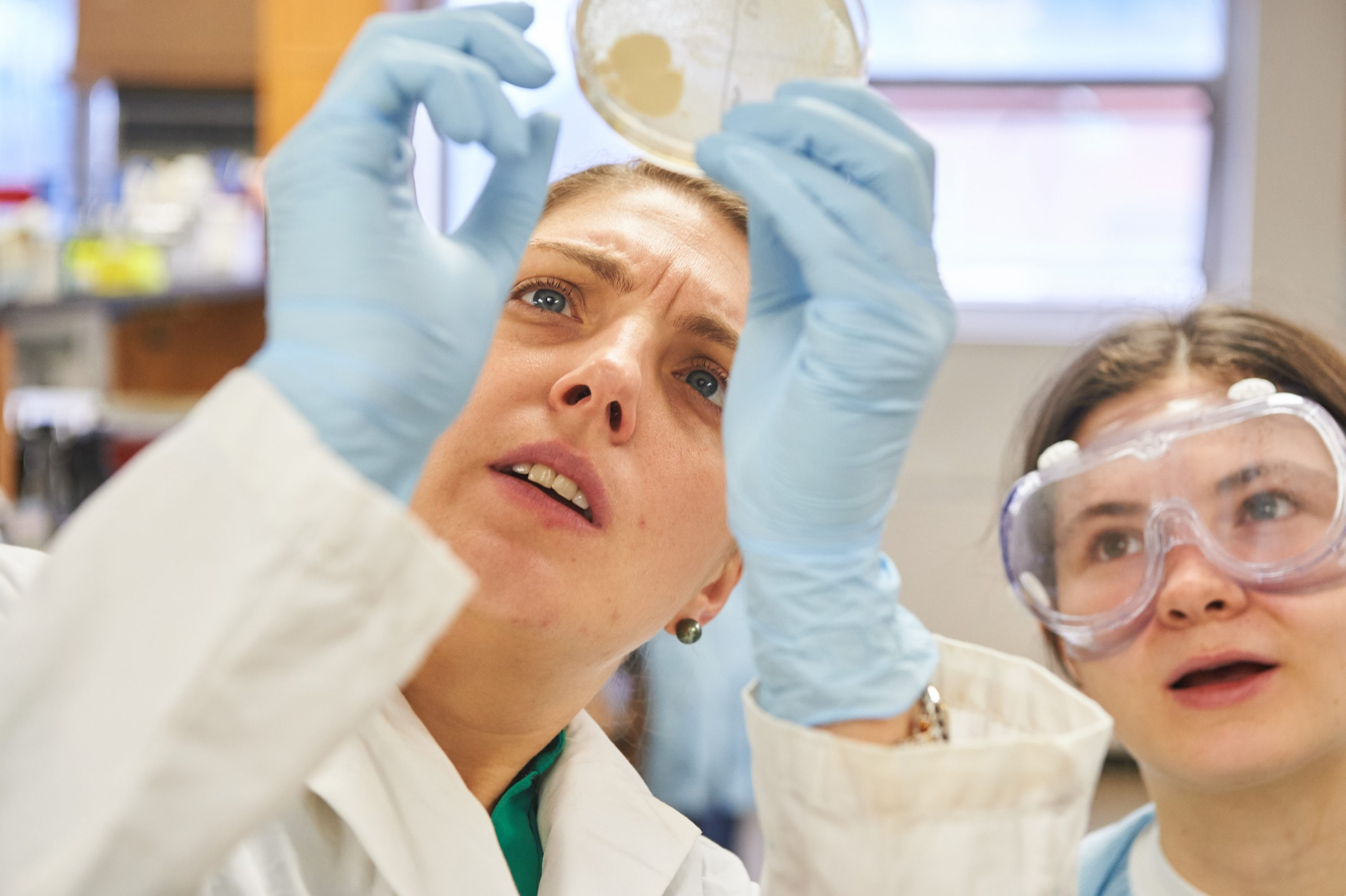 Nichole Broderick, assistant professor of molecular and cell biology, left, and Katherine Tiernan '19 (ENG) look at a bacteria culture plate during a 'Microbe Hunting' class, part of a global collaboration between students and microbiologists called the Small World Initiative. (Peter Morenus/UConn Photo)