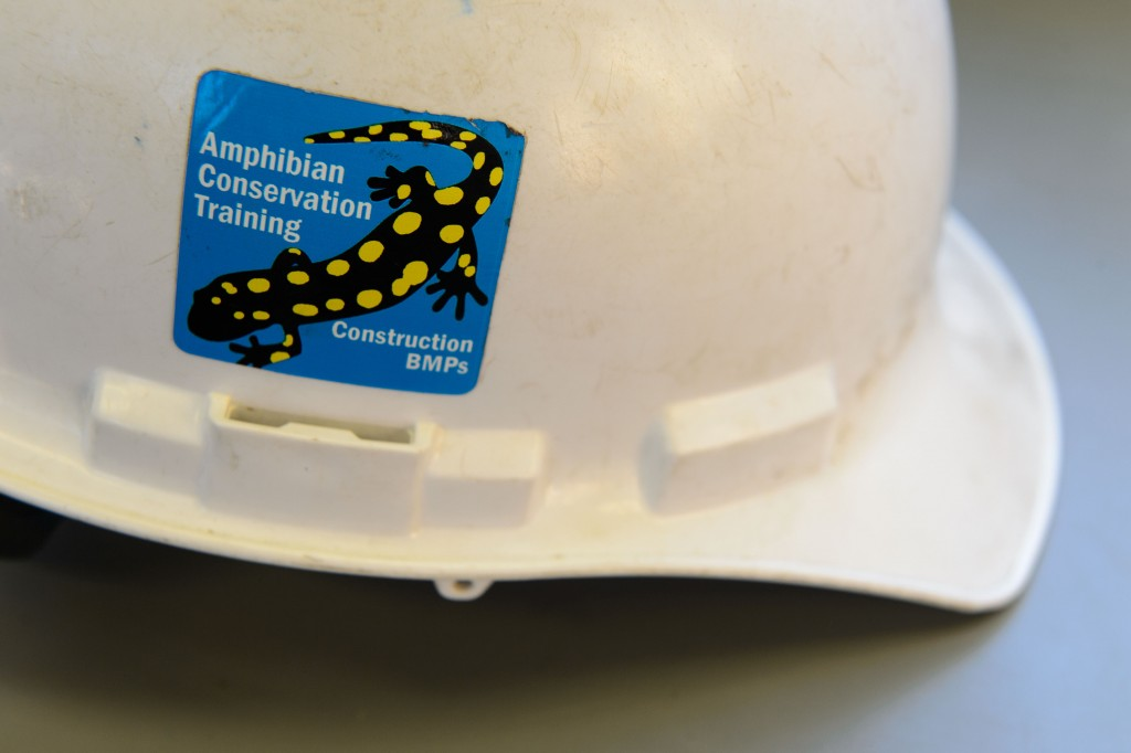 This sticker was given to construction workers on the Discovery Drive project, following training to protect amphibians that live along the road. (Peter Morenus/UConn Photo)