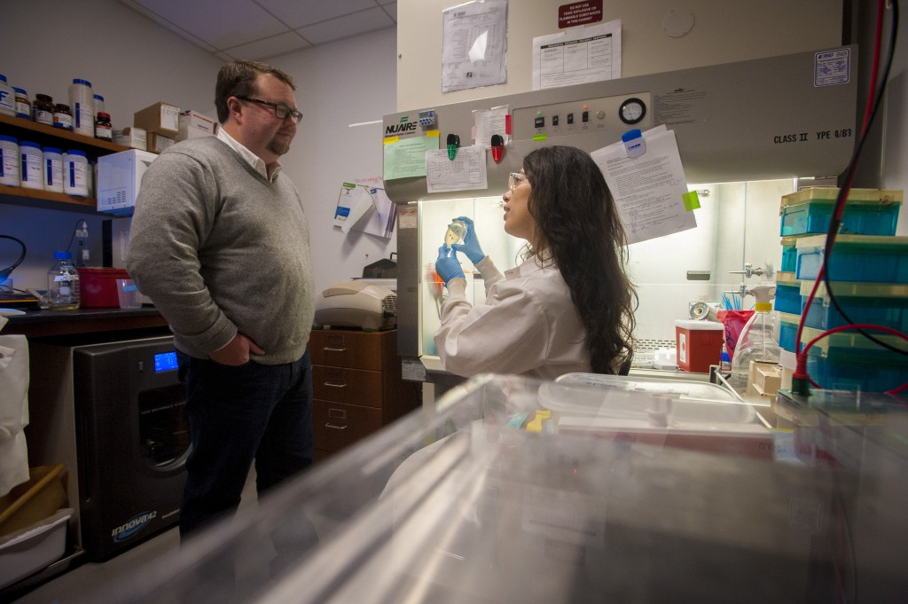 Molecular and cell biology professor Spencer Nyholm and graduate student Andrea Suria discuss samples of bacteria found in the bobtail squid. (Sean Flynn/UConn Photo)