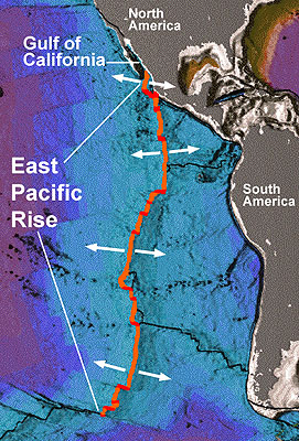 The East Pacific Rise is an immense underwater mountain range. The bathymetry (underwater topography) in this image is from a 1996 poster by the National Oceanic and Atmospheric Administration titled 'Age of the Sea Floor.' (Copyright MBARI/NOAA, approved for use on UConn Today)