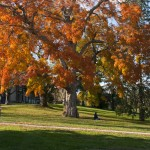 A student rests under a tree on the front lawn of campus.