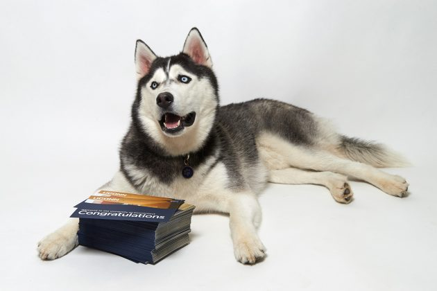 UConn Sets New Record for Freshman Applications