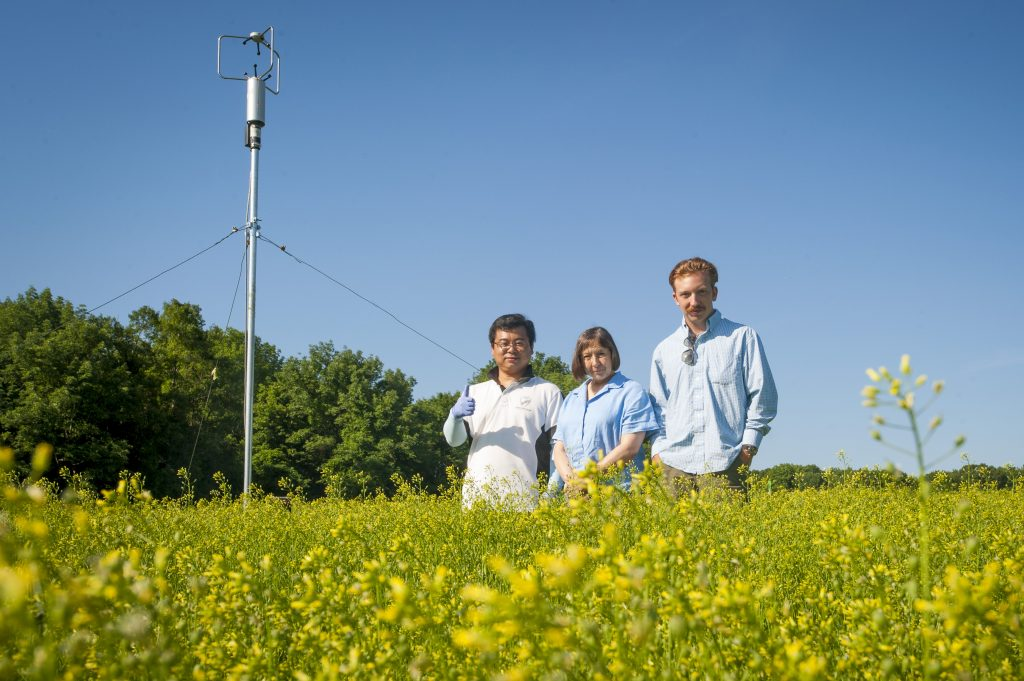 (left to right) Chuan-Jie Zhang, Carol Auer professor emerita, Richard Rizzitello in a field of Camelina Sativa on June 20, 2016. (Sean Flynn/UConn Photo)