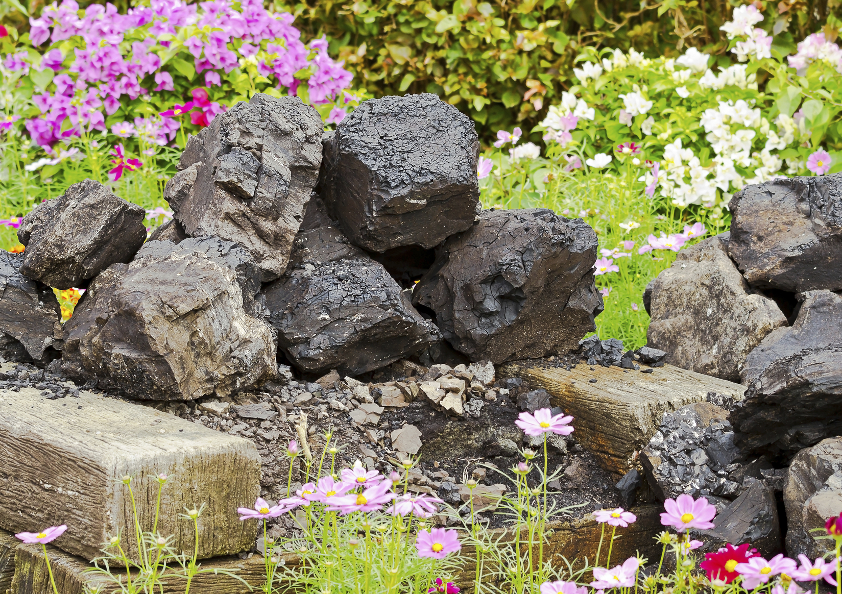 Flowers spring up around a pile of coal. (iStock)