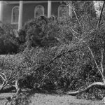 Nearly 80 years ago, students returning to Storrs for the start of classes found a campus with no electricity, phones, or water, and hundreds of trees blocking roads and walkways. (Jerauld Manter Photo/Archives & Special Collections, UConn Library)