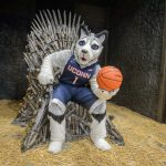 Jonathan the Husky sits on a replica of the Iron Throne from the TV show Game of Thrones at the Ratcliffe Hicks Arena. (Peter Morenus/UConn Photo)