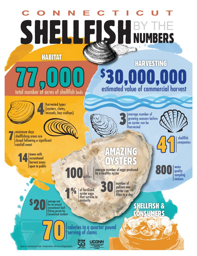 CT Shellfish by the Numbers. (Illustration courtesy of UConn College of Agriculture, Health, and Natural Resources)