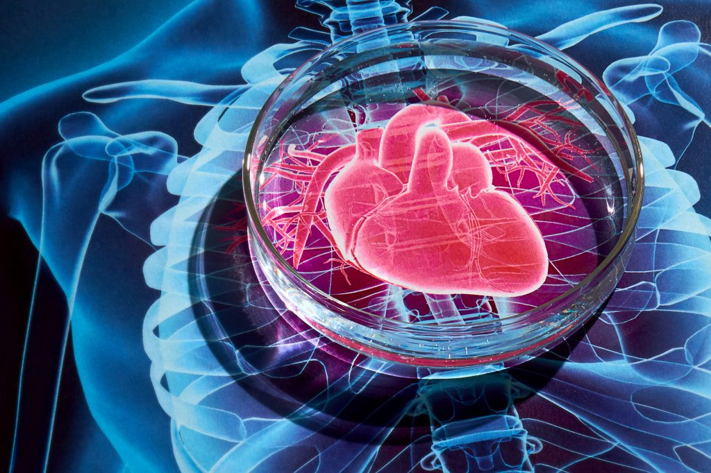 Small Liberal Arts Colleges >> 'Heart-In-A-Dish' Sheds Light on Genetics of Heart Disease ...