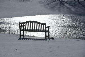 An empty bench at Swan Lake on Jan. 9, 2017. (Sean Flynn/UConn Photo)