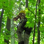 Amanda Bunce, a master's degree student in the Department of Natural Resources and the Environment, climbs a 30-foot ladder in order to affix a monitoring device to a red oak. (Sheila Foran/UConn Photo)