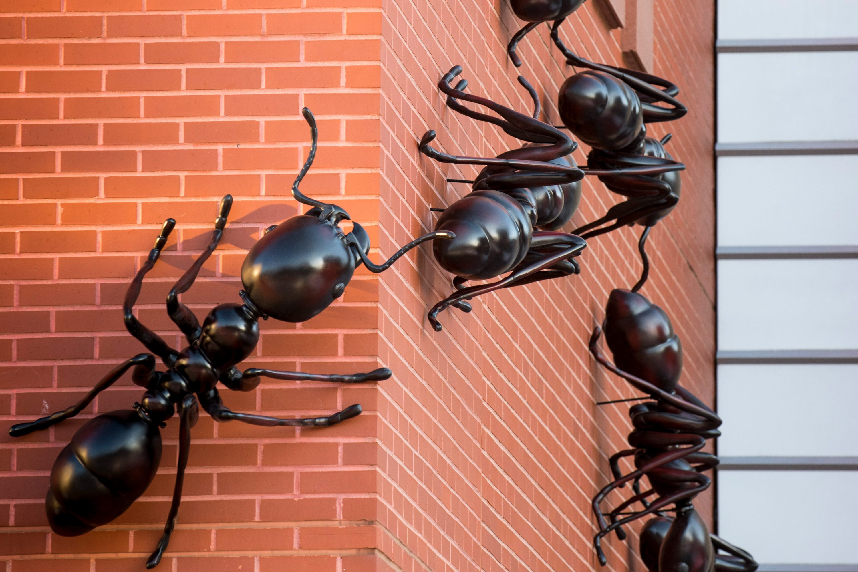 Army Ants March into New Exhibition