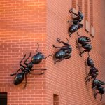 Seven four-foot ants on the outside of the Biology/Physics Building lead the way to a new exhibition. (Sean Flynn/UConn Photo)