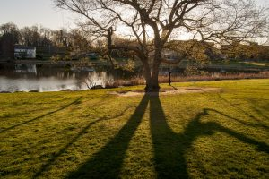 Shadows of a tree beside Mirror Lake. (Sean Flynn/UConn Photo)